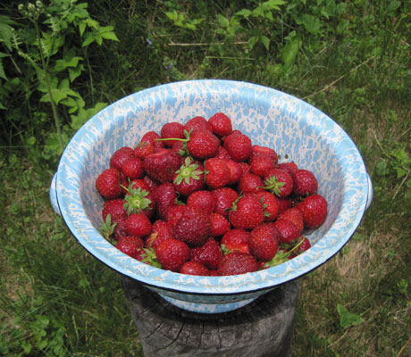 bowl of strawberries July 1